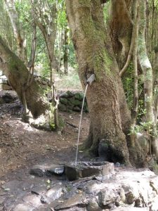 Der Baum der pisst