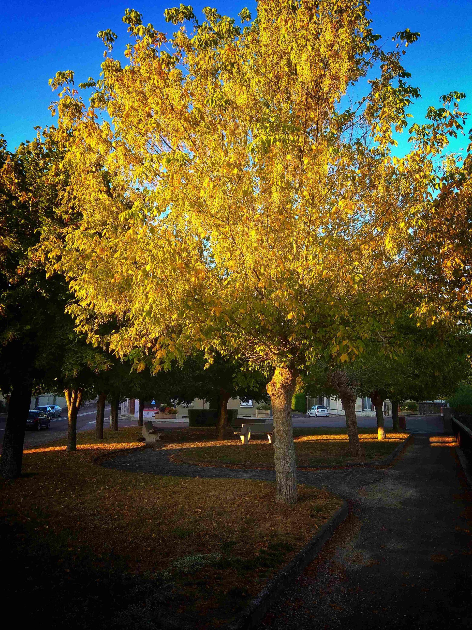 Herbst an der Aube